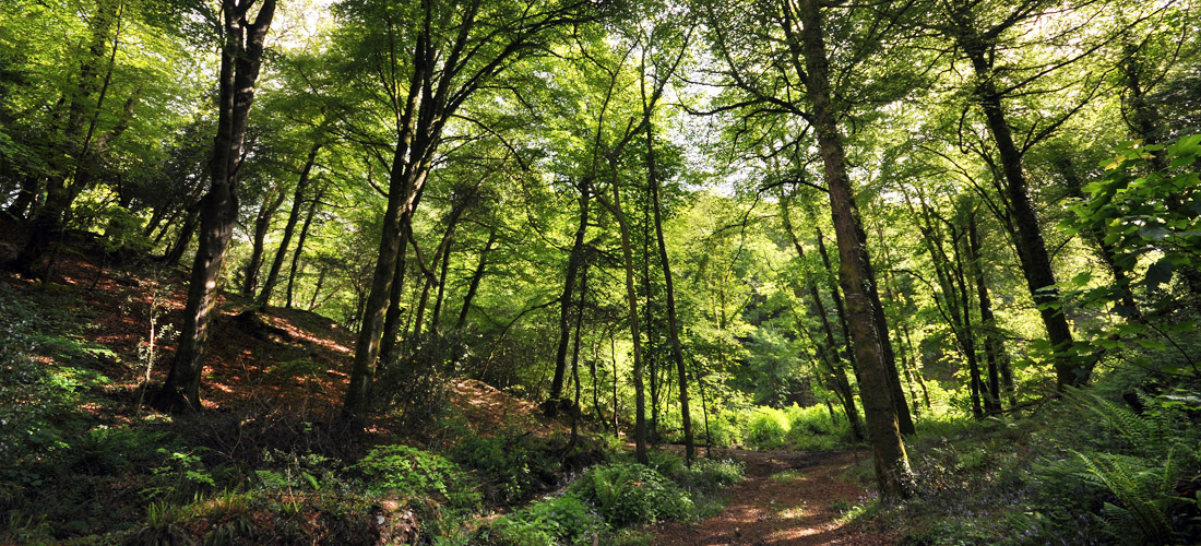 Explore our beautiful woodland